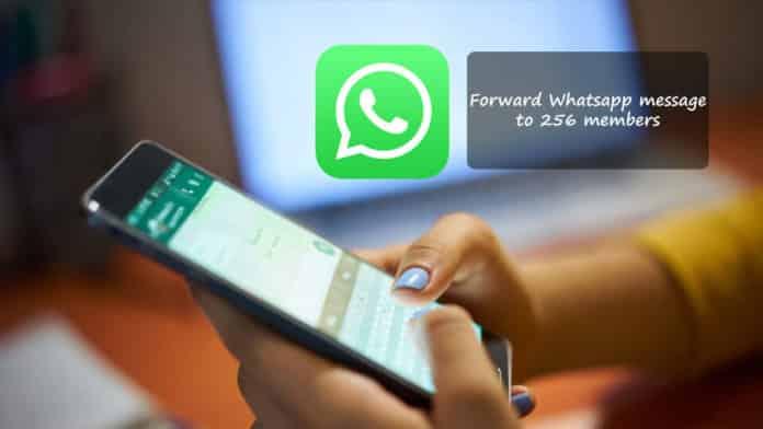 Forward Whatsapp message to 256 members